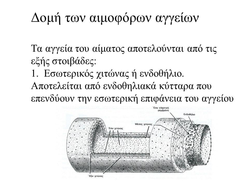 Οι μεγάλες φλέβες - Έχουν εσωτερικό χιτώνα καλά ανεπτυγμένο - Ο μέσος χιτώνας είναι λεπτότερος - Η εξωτερική στοιβάδα είναι η παχύτερη και καλά αναπτυγμένη, ώστε να εμποδίζεται η διάταση του αγγείου - Στο εσωτερικό τους έχουν βαλβίδες, δηλαδή ημισελινοειδείς πτυχές του εσωτερικού χιτώνα που προβάλλουν μέσα στον αυλό.