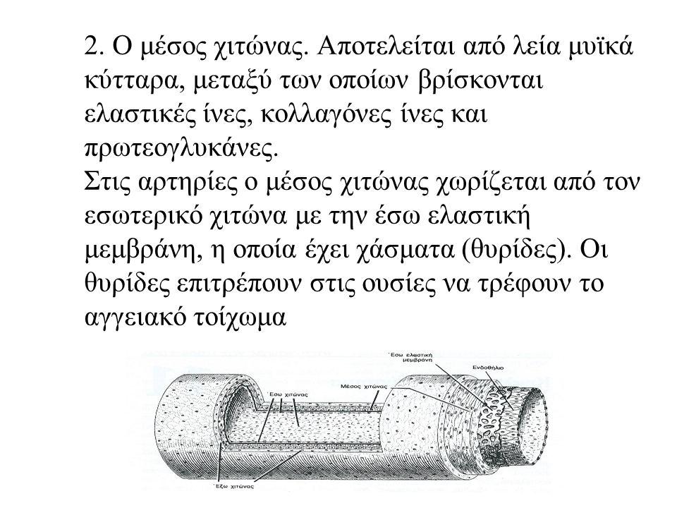 Στη διαδρομή των λεμφικών αγγείων παρεμβάλλονται οι λεμφαδένες Τα μεγάλα λεμφικά αγγεία έχουν παρόμοια δομή με αυτή των φλεβών με τις παρακάτω διαφορές: 1.Δεν είναι ξεκάθαρος ο χωρισμός μεταξύ των τριών στοιβάδων 2.Οι εσωτερικές βαλβίδες που υπάρχουν και εδώ είναι περισσότερες.