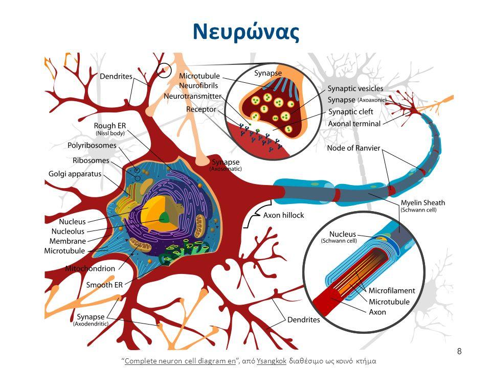 Νευροπάθειες 4/6 Παθογένεια Ανάλογα με το αίτιο είναι διαφορετικός ο μηχανισμός βλάβης του περιφερικού νεύρου.