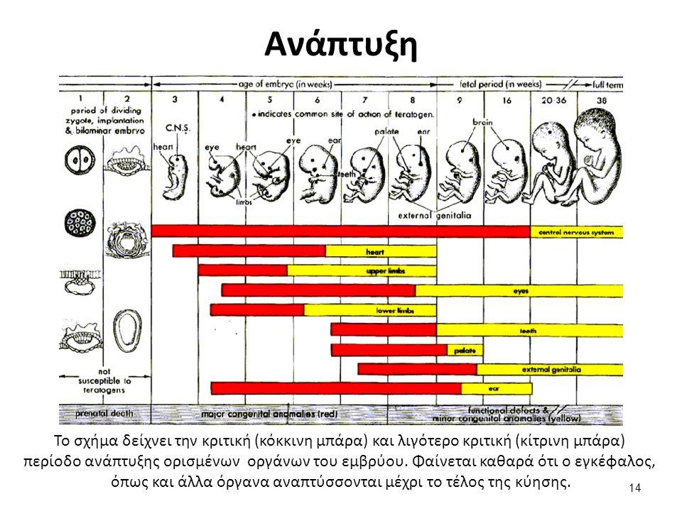 Το σχήμα δείχνει την κριτική (κόκκινη μπάρα) και λιγότερο κριτική (κίτρινη μπάρα) περίοδο ανάπτυξης ορισμένων οργάνων του εμβρύου.