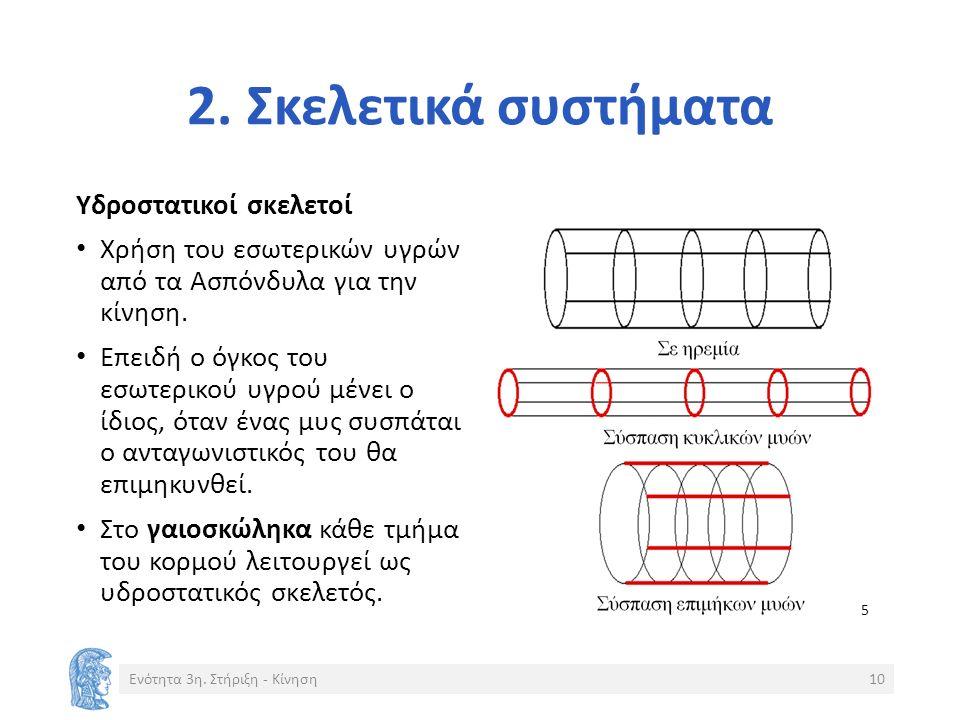 2. Σκελετικά συστήματα Υδροστατικοί σκελετοί Χρήση του εσωτερικών υγρών από τα Ασπόνδυλα για την κίνηση. Επειδή ο όγκος του εσωτερικού υγρού μένει ο ί