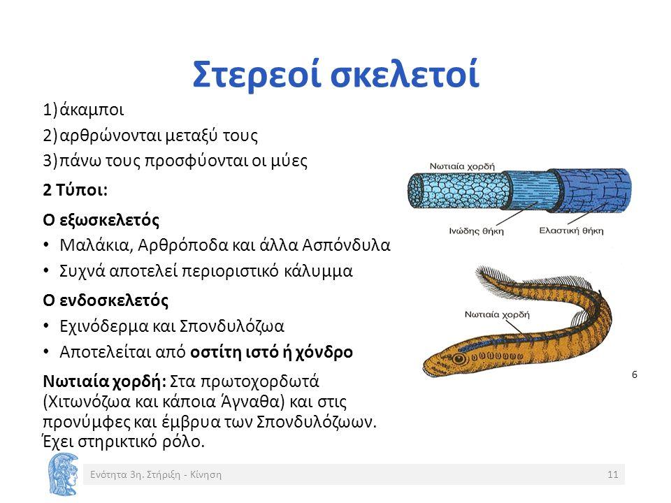 Στερεοί σκελετοί 1)άκαμποι 2)αρθρώνονται μεταξύ τους 3)πάνω τους προσφύονται οι μύες 2 Τύποι: Ο εξωσκελετός Μαλάκια, Αρθρόποδα και άλλα Ασπόνδυλα Συχνά αποτελεί περιοριστικό κάλυμμα Ο ενδοσκελετός Εχινόδερμα και Σπονδυλόζωα Αποτελείται από οστίτη ιστό ή χόνδρο Νωτιαία χορδή: Στα πρωτοχορδωτά (Χιτωνόζωα και κάποια Άγναθα) και στις προνύμφες και έμβρυα των Σπονδυλόζωων.