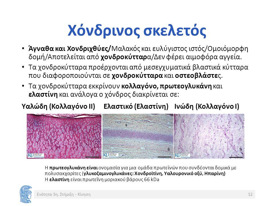 Χόνδρινος σκελετός Άγναθα και Χονδριχθύες/Μαλακός και ευλύγιστος ιστός/Ομοιόμορφη δομή/Αποτελείται από χονδροκύτταρα/Δεν φέρει αιμοφόρα αγγεία.