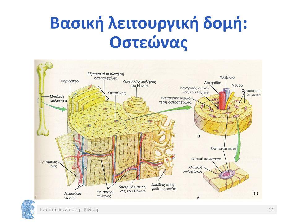 Βασική λειτουργική δομή: Οστεώνας Ενότητα 3η. Στήριξη - Κίνηση14 10