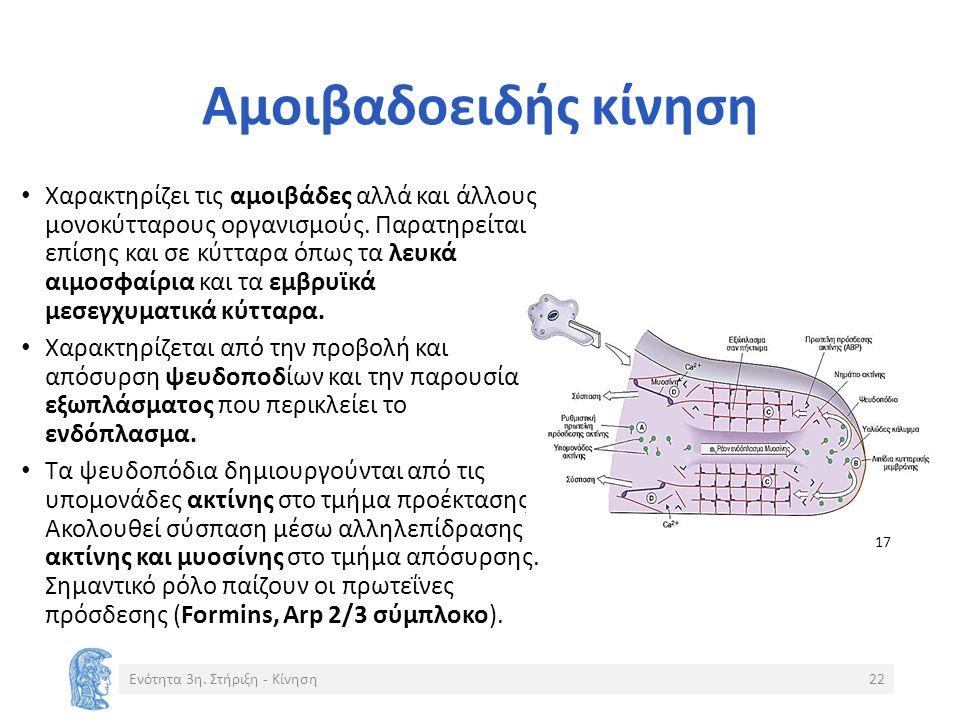 Αμοιβαδοειδής κίνηση Χαρακτηρίζει τις αμοιβάδες αλλά και άλλους μονοκύτταρους οργανισμούς.