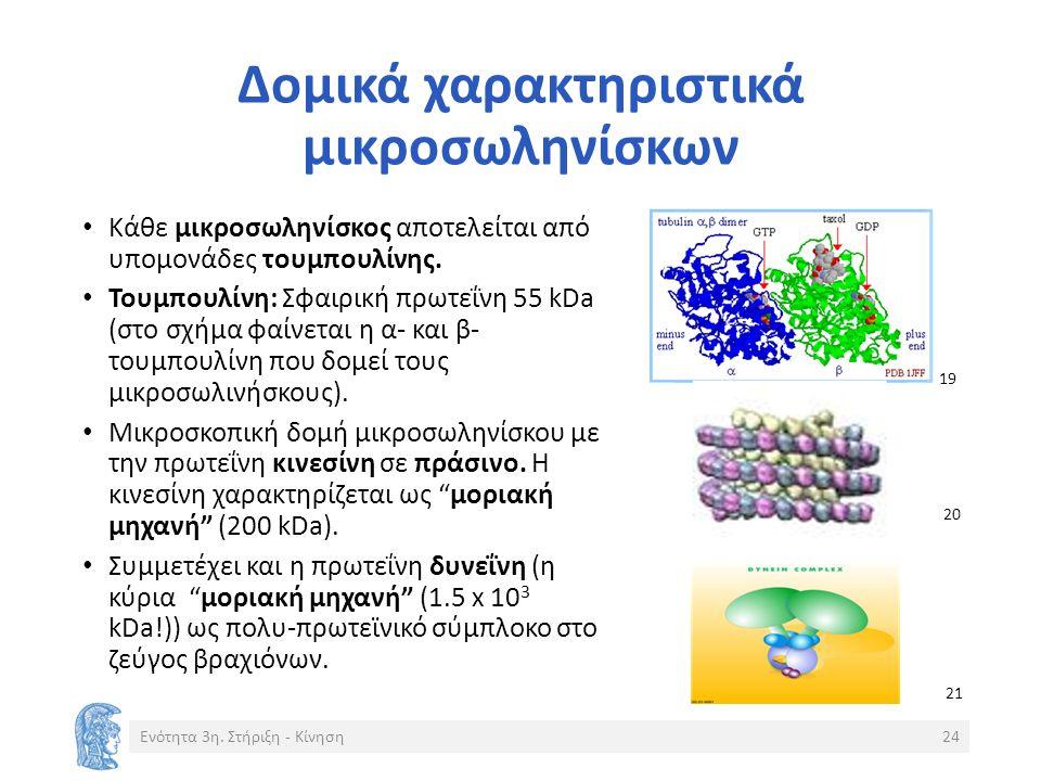 Δομικά χαρακτηριστικά μικροσωληνίσκων Κάθε μικροσωληνίσκος αποτελείται από υπομονάδες τουμπουλίνης.