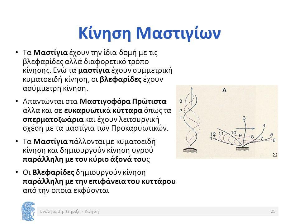 Κίνηση Μαστιγίων Τα Μαστίγια έχουν την ίδια δομή με τις βλεφαρίδες αλλά διαφορετικό τρόπο κίνησης.