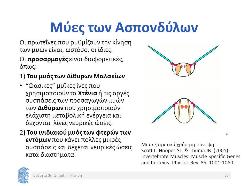 Μύες των Ασπονδύλων Οι πρωτεΐνες που ρυθμίζουν την κίνηση των μυών είναι, ωστόσο, οι ίδιες.