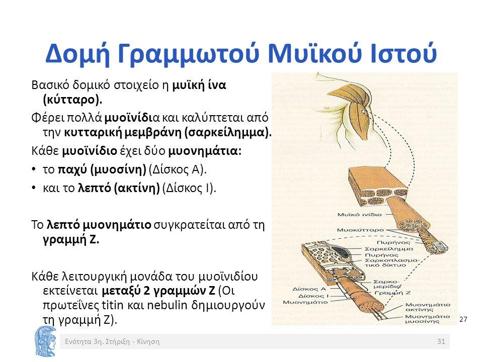 Δομή Γραμμωτού Μυϊκού Ιστού Βασικό δομικό στοιχείο η μυϊκή ίνα (κύτταρο).