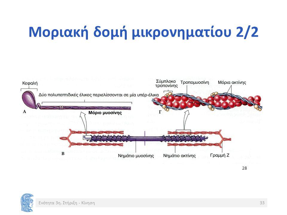 Μοριακή δομή μικρονηματίου 2/2 Ενότητα 3η. Στήριξη - Κίνηση33 28