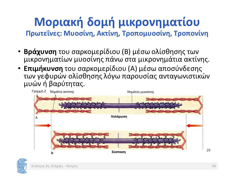 Μοριακή δομή μικρονηματίου Πρωτεΐνες: Μυοσίνη, Ακτίνη, Τροπομυοσίνη, Τροπονίνη Βράχυνση του σαρκομερίδιου (Β) μέσω ολίσθησης των μικρονηματίων μυοσίνης πάνω στα μικρονημάτια ακτίνης.