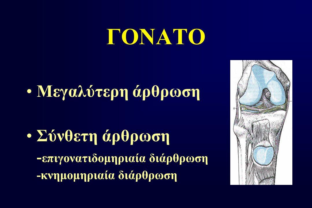 ΓΟΝΑΤΟ Μεγαλύτερη άρθρωση Σύνθετη άρθρωση - επιγονατιδομηριαία διάρθρωση -κνημομηριαία διάρθρωση