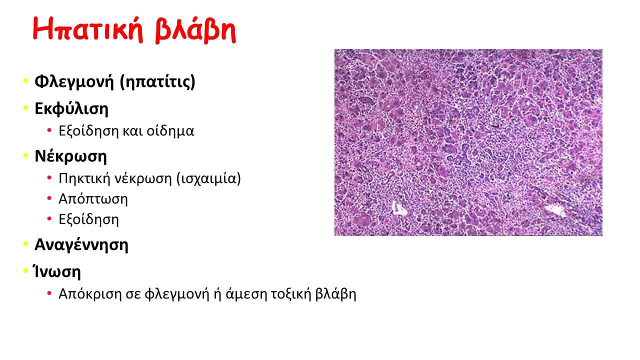 Ηπατική βλάβη Φλεγμονή (ηπατίτις) Εκφύλιση Εξοίδηση και οίδημα Νέκρωση Πηκτική νέκρωση (ισχαιμία) Απόπτωση Εξοίδηση Αναγέννηση Ίνωση Απόκριση σε φλεγμ