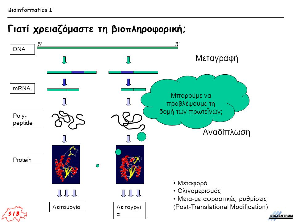 Μεταγραφή DNA 5'3' mRNA Splicing Translation Poly- peptide Αναδίπλωση Protein Μεταφορά Ολιγομερισμός Μετα-μεταφραστικές ρυθμίσεις (Post-Translational