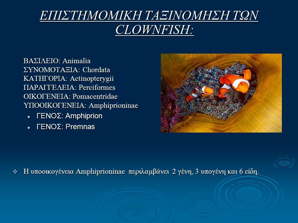 ΕΠΙΣΤΗΜΟΜΙΚΗ ΤΑΞΙΝΟΜΗΣΗ ΤΩΝ CLOWNFISH: ΒΑΣΙΛΕΙΟ: Animalia ΣΥΝΟΜΟΤΑΞΙΑ: Chordata ΚΑΤΗΓΟΡΙΑ: Actinopterygii ΠΑΡΑΓΓΕΛΕΙΑ: Perciformes ΟΙΚΟΓΕΝΕΙΑ: Pomacentridae ΥΠΟΟΙΚΟΓΕΝΕΙΑ: Amphiprioninae ΓΕΝΟΣ: Amphiprion ΓΕΝΟΣ: Amphiprion ΓΕΝΟΣ: Premnas ΓΕΝΟΣ: Premnas  Η υποοικογένεια Amphiprioninae περιλαμβάνει 2 γένη, 3 υπογένη και 6 είδη.