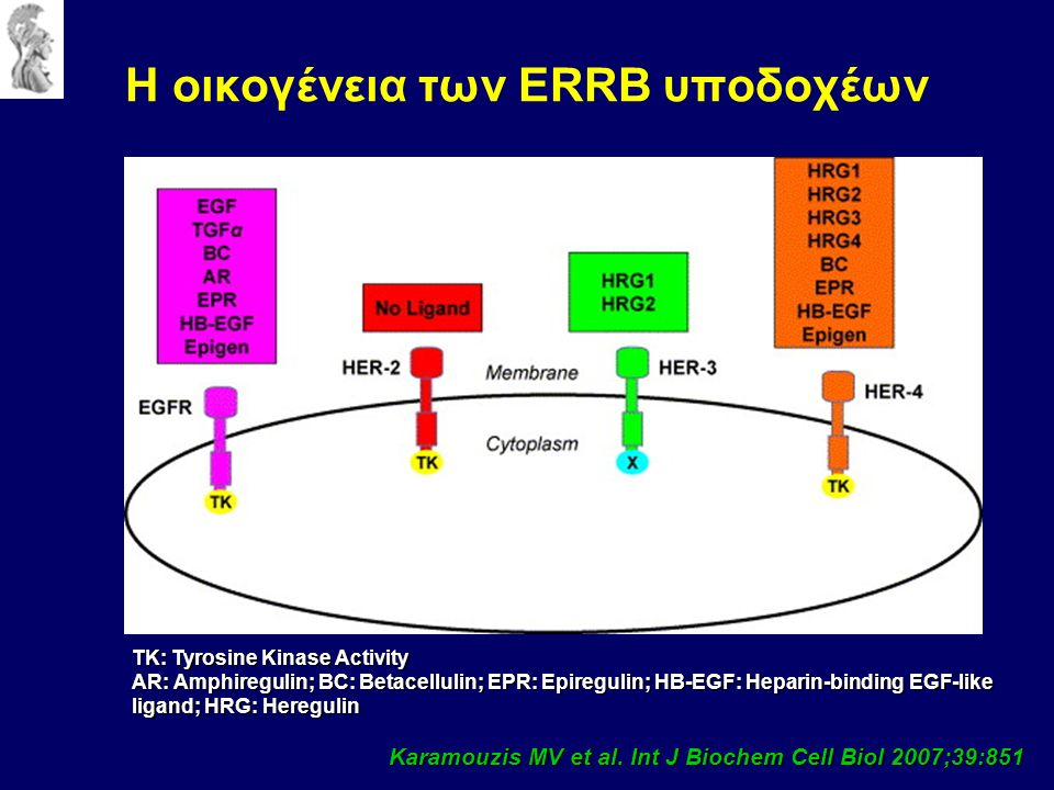 Karamouzis MV et al. Int J Biochem Cell Biol 2007;39:851 Η οικογένεια των ERRB υποδοχέων ΤΚ: Tyrosine Kinase Activity AR: Amphiregulin; BC: Betacellul