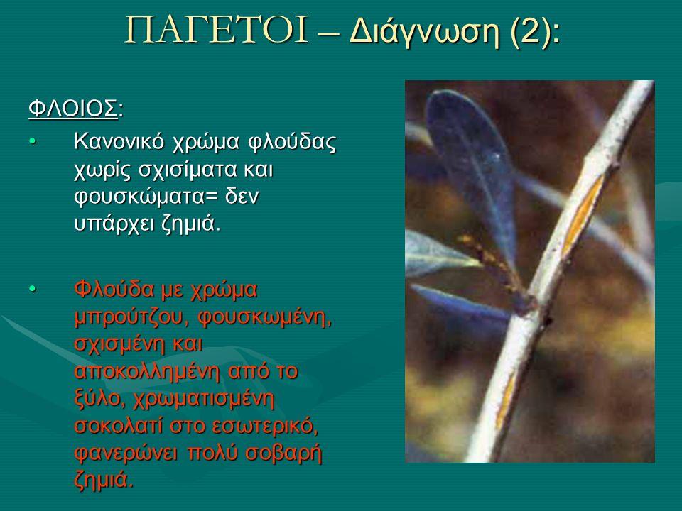 ΠΑΓΕΤΟΙ – Διάγνωση (3): ΧΡΩΜΑ ΞΥΛΟΥ: σημαντικό διαγνωστικό σημάδι, αλλά απαιτεί εμπειρία: το γερό ξύλο είναι (γλοιώδες) υγρό και λευκοκίτρινο το ζημιωμένο ξύλο: το χρώμα κλιμακώνεται, από το ανοικτό κόκκινο μέχρι το σοκολατί.