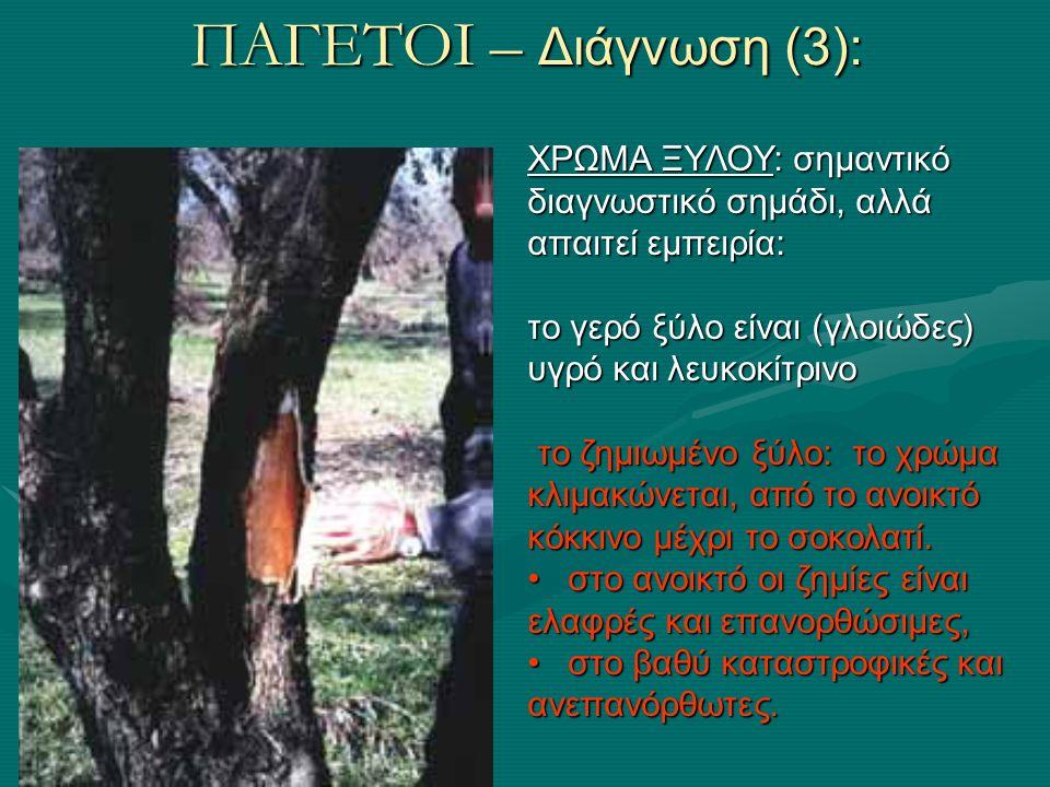 ΠΑΓΕΤΟΙ Επιπτώσεις: καταστροφή παραγωγής του έτους αλλά κυρίωςκαταστροφή παραγωγής του έτους αλλά κυρίως χάνεται το εισόδημα και επόμενων ετών, γιατί εισάγει το δέντρο σε έντονη παρενιαυτοφορίαχάνεται το εισόδημα και επόμενων ετών, γιατί εισάγει το δέντρο σε έντονη παρενιαυτοφορία Κρίσιμοι παράγοντες για το μέγεθος της ζημιάς: Ποικιλία και Βλαστικό στάδιο δέντρουΠοικιλία και Βλαστικό στάδιο δέντρου Καλλιεργητικές τεχνικές (π.χ.