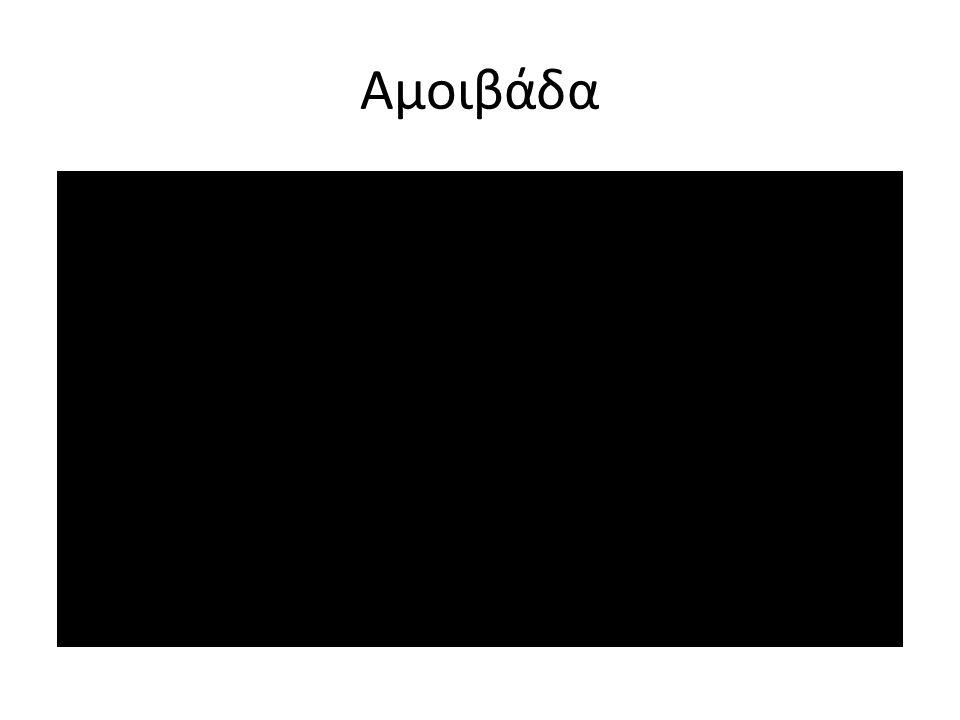 Αμοιβάδα