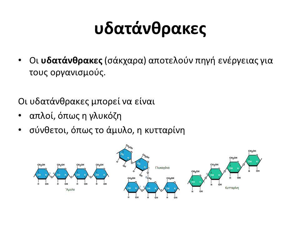 πρωτεΐνες Οι πρωτεΐνες αποτελούν δομικά ή λειτουργικά συστατικά των κυττάρων και δομούνται από απλούστερες ενώσεις, τα αμινοξέα Στη δημιουργία των πρωτεϊνών συμμετέχουν μόνο 20 αμινοξέα