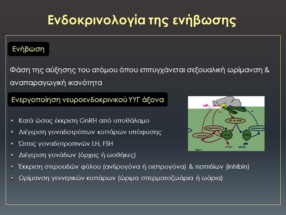 Φάση της αύξησης του ατόμου όπου επιτυγχάνεται σεξουαλική ωρίμανση & αναπαραγωγική ικανότητα Κατά ώσεις έκκριση GnRH από υποθάλαμο Διέγερση γοναδοτρόπων κυττάρων υπόφυσης Ώσεις γοναδοτροπινών LH, FSH Διέγερση γονάδων (όρχεις ή ωοθήκες) Έκκριση στεροειδών φύλου (ανδρογόνα ή οιστρογόνα) & πεπτιδίων (inhibin) Ωρίμανση γεννητικών κυττάρων (ώριμα σπερματοζωάρια ή ωάρια) Ενδοκρινολογία της ενήβωσης Eνεργοποίηση νευροενδοκρινικού ΥΥΓ άξονα Ενήβωση