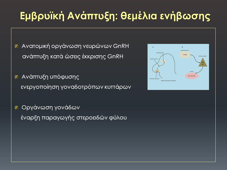 Ανατομική οργάνωση νευρώνων GnRH aνάπτυξη κατά ώσεις έκκρισης GnRH Ανάπτυξη υπόφυσης ενεργοποίηση γοναδοτρόπων κυττάρων Οργάνωση γονάδων έναρξη παραγωγής στεροειδών φύλου Εμβρυϊκή Ανάπτυξη: θεμέλια ενήβωσης