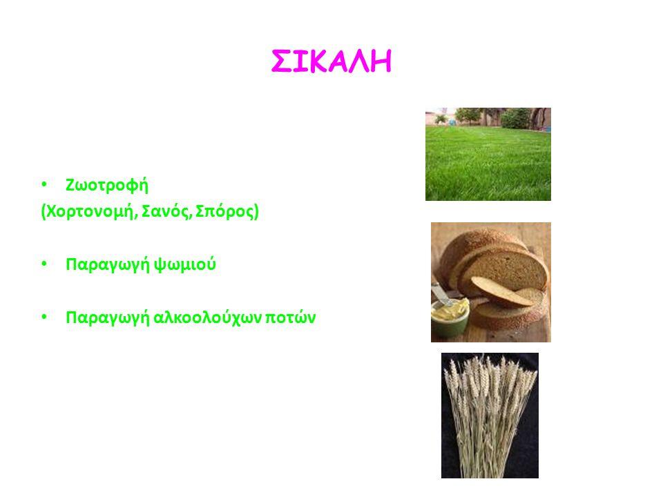 ΣΙΚΑΛΗ Ζωοτροφή (Χορτονομή, Σανός, Σπόρος) Παραγωγή ψωμιού Παραγωγή αλκοολούχων ποτών