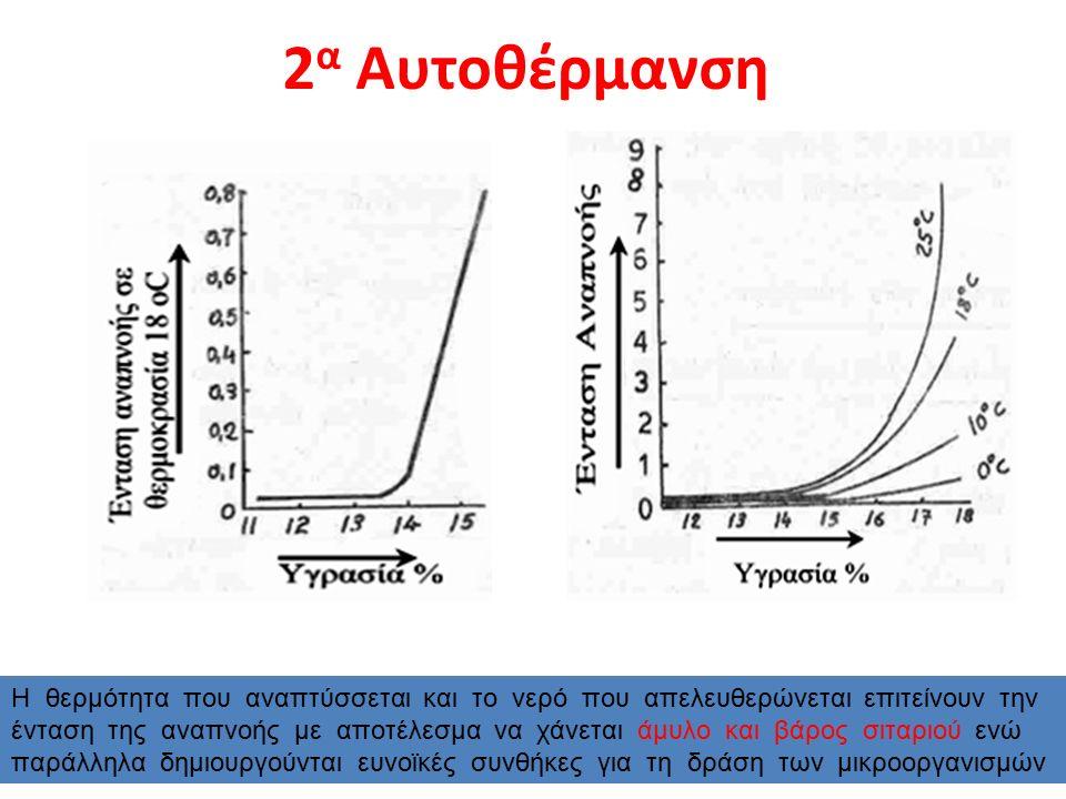2 α Αυτοθέρμανση Η θερμότητα που αναπτύσσεται και το νερό που απελευθερώνεται επιτείνουν την ένταση της αναπνοής με αποτέλεσμα να χάνεται άμυλο και βάρος σιταριού ενώ παράλληλα δημιουργούνται ευνοϊκές συνθήκες για τη δράση των μικροοργανισμών