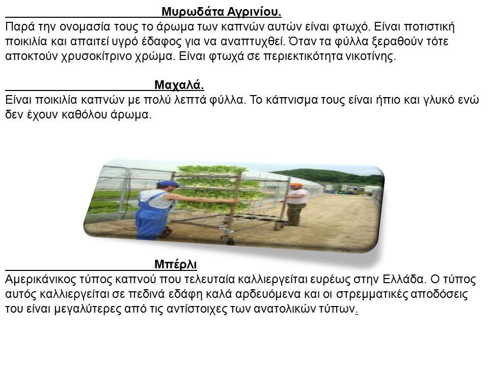 Μυρωδάτα Αγρινίου. Παρά την ονομασία τους το άρωμα των καπνών αυτών είναι φτωχό. Είναι ποτιστική ποικιλία και απαιτεί υγρό έδαφος για να αναπτυχθεί. Ό