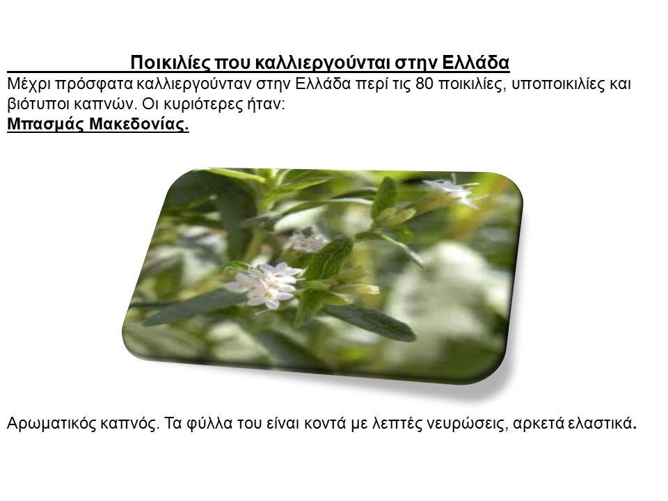 Ποικιλίες που καλλιεργούνται στην Ελλάδα Μέχρι πρόσφατα καλλιεργούνταν στην Ελλάδα περί τις 80 ποικιλίες, υποποικιλίες και βιότυποι καπνών. Οι κυριότε