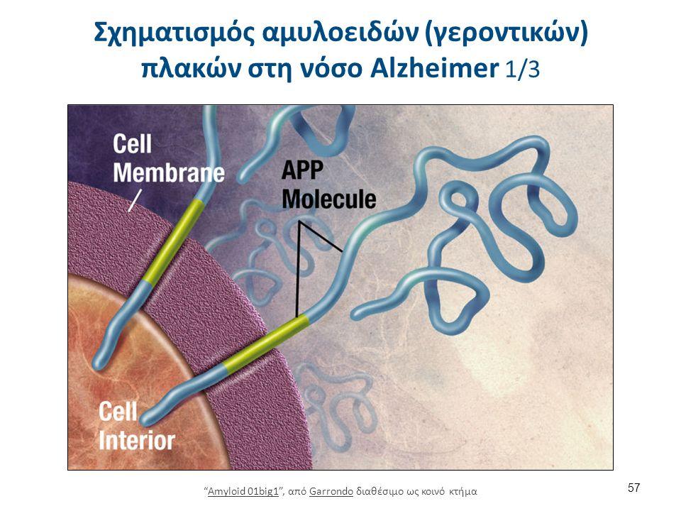Σχηματισμός αμυλοειδών (γεροντικών) πλακών στη νόσο Alzheimer 1/3 57 Amyloid 01big1 , από Garrondo διαθέσιμο ως κοινό κτήμαAmyloid 01big1Garrondo