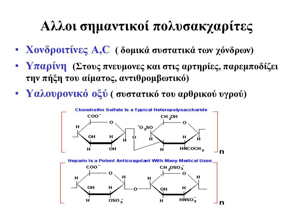 Αλλοι σημαντικοί πολυσακχαρίτες Χονδροιτίνες Α,C ( δομικά συστατικά των χόνδρων) Υπαρίνη (Στους πνευμονες και στις αρτηρίες, παρεμποδίζει την πήξη του αίματος, αντιθρομβωτικό) Υαλουρονικό οξύ ( συστατικό του αρθρικού υγρού)