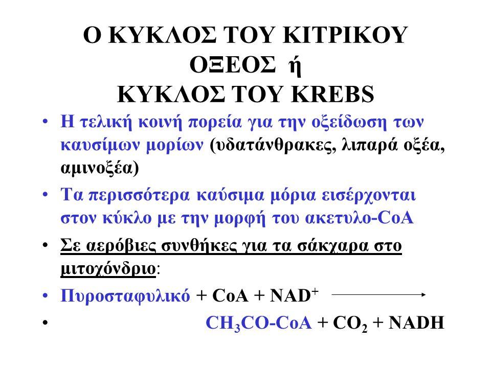 Ο ΚΥΚΛΟΣ ΤΟΥ ΚΙΤΡΙΚΟΥ ΟΞΕΟΣ ή ΚΥΚΛΟΣ ΤΟΥ KREBS H τελική κοινή πορεία για την οξείδωση των καυσίμων μορίων (υδατάνθρακες, λιπαρά οξέα, αμινοξέα) Τα περισσότερα καύσιμα μόρια εισέρχονται στον κύκλο με την μορφή του ακετυλο-CoA Σε αερόβιες συνθήκες για τα σάκχαρα στο μιτοχόνδριο: Πυροσταφυλικό + CoA + NAD + CH 3 CO-CoA + CO 2 + NADH