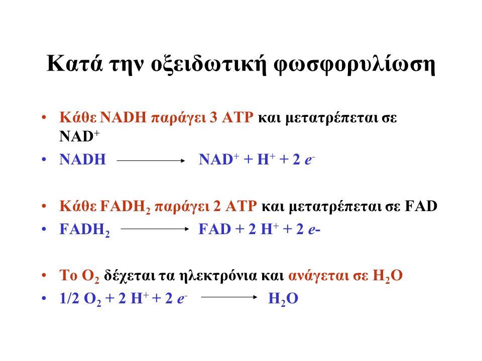 Κατά την οξειδωτική φωσφορυλίωση Κάθε NADH παράγει 3 ΑΤΡ και μετατρέπεται σε NAD + NADH NAD + + H + + 2 e - Κάθε FADH 2 παράγει 2 ΑΤΡ και μετατρέπεται σε FAD FADH 2 FAD + 2 H + + 2 e- To O 2 δέχεται τα ηλεκτρόνια και ανάγεται σε Η 2 Ο 1/2 O 2 + 2 H + + 2 e - H 2 O