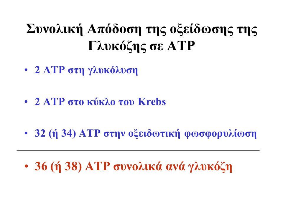 Συνολική Απόδοση της οξείδωσης της Γλυκόζης σε ΑΤΡ 2 ΑΤΡ στη γλυκόλυση 2 ΑΤΡ στο κύκλο του Krebs 32 (ή 34) ΑΤΡ στην οξειδωτική φωσφορυλίωση 36 (ή 38) ΑΤΡ συνολικά ανά γλυκόζη