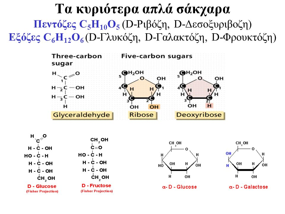 Τα κυριότερα απλά σάκχαρα Πεντόζες C 5 H 10 O 5 (D-Ριβόζη, D-Δεσοξυριβοζη) Εξόζες C 6 H 12 O 6 (D-Γλυκόζη, D-Γαλακτόζη, D-Φρουκτόζη)