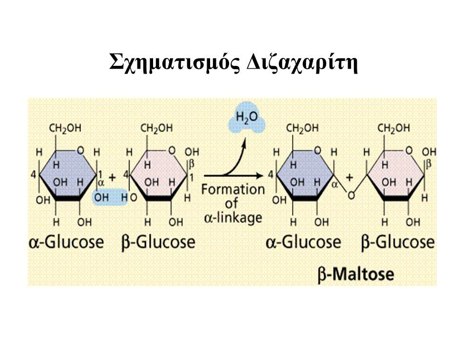 Οι κυριότεροι Δισακχαρίτες Σακχαρόζη, Λακτόζη, Μαλτόζη (C 12 H 22 O 11 ) Σακχαρόζη + Η 2 Ο ΣΑΚΧΑΡΑΣΗ Γλυκόζη + Φρουκτόζη Λακτόζη + Η 2 Ο ΛΑΚΤΑΣΗ Γαλακτόζη + Γλυκόζη Μαλτόζη + Η 2 Ο ΜΑΛΤΑΣΗ Γλυκόζη + Γλυκόζη