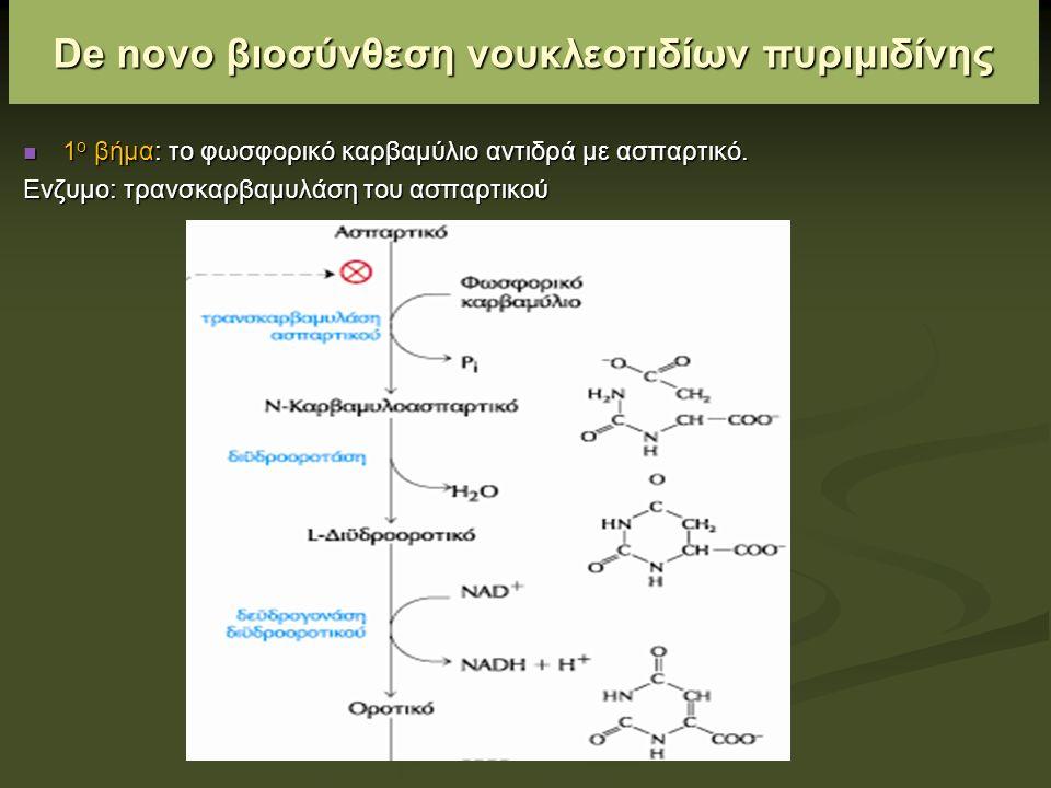 De novo βιοσύνθεση νουκλεοτιδίων πυριμιδίνης 1 ο βήμα: το φωσφορικό καρβαμύλιο αντιδρά με ασπαρτικό.