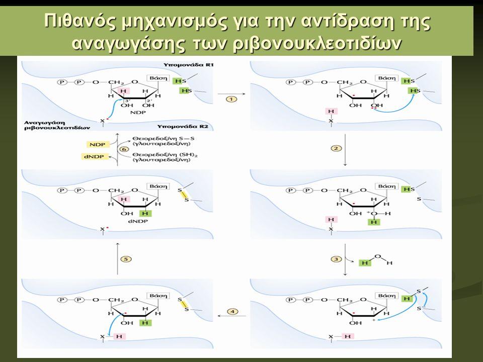 Πιθανός μηχανισμός για την αντίδραση της αναγωγάσης των ριβονουκλεοτιδίων
