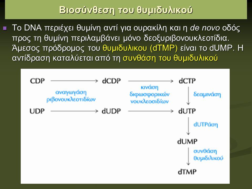 Βιοσύνθεση του θυμιδυλικού Το DΝΑ περιέχει θυμίνη αντί για ουρακίλη και η de novo οδός προς τη θυμίνη περιλαμβάνει μόνο δεοξυριβονουκλεοτίδια.