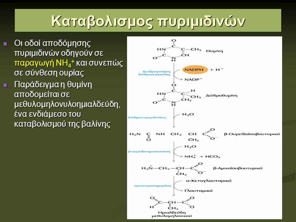 Καταβολισμος πυριμιδινών Οι οδοί αποδόμησης πυριμιδινών οδηγούν σε παραγωγή ΝΗ 4 + και συνεπώς σε σύνθεση ουρίας Οι οδοί αποδόμησης πυριμιδινών οδηγούν σε παραγωγή ΝΗ 4 + και συνεπώς σε σύνθεση ουρίας Παράδειγμα η θυμίνη αποδομείται σε μεθυλομηλονυλοημιαλδεύδη, ένα ενδιάμεσο του καταβολισμού της βαλίνης Παράδειγμα η θυμίνη αποδομείται σε μεθυλομηλονυλοημιαλδεύδη, ένα ενδιάμεσο του καταβολισμού της βαλίνης