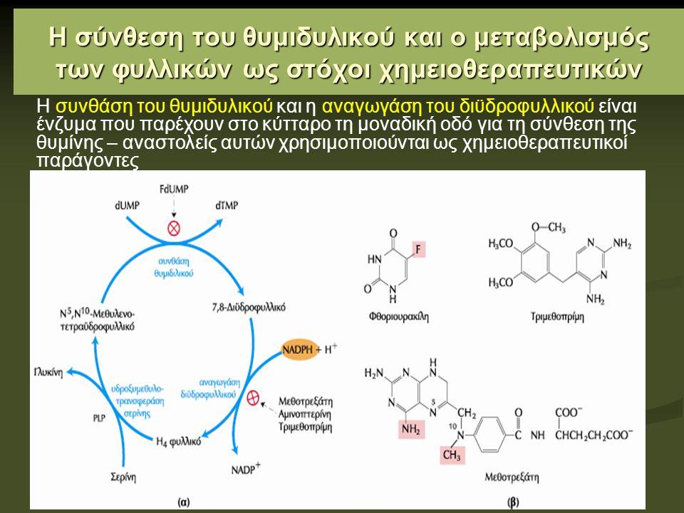 Η σύνθεση του θυμιδυλικού και ο μεταβολισμός των φυλλικών ως στόχοι χημειοθεραπευτικών Η συνθάση του θυμιδυλικού και η αναγωγάση του διϋδροφυλλικού είναι ένζυμα που παρέχουν στο κύτταρο τη μοναδική οδό για τη σύνθεση της θυμίνης – αναστολείς αυτών χρησιμοποιούνται ως χημειοθεραπευτικοί παράγοντες