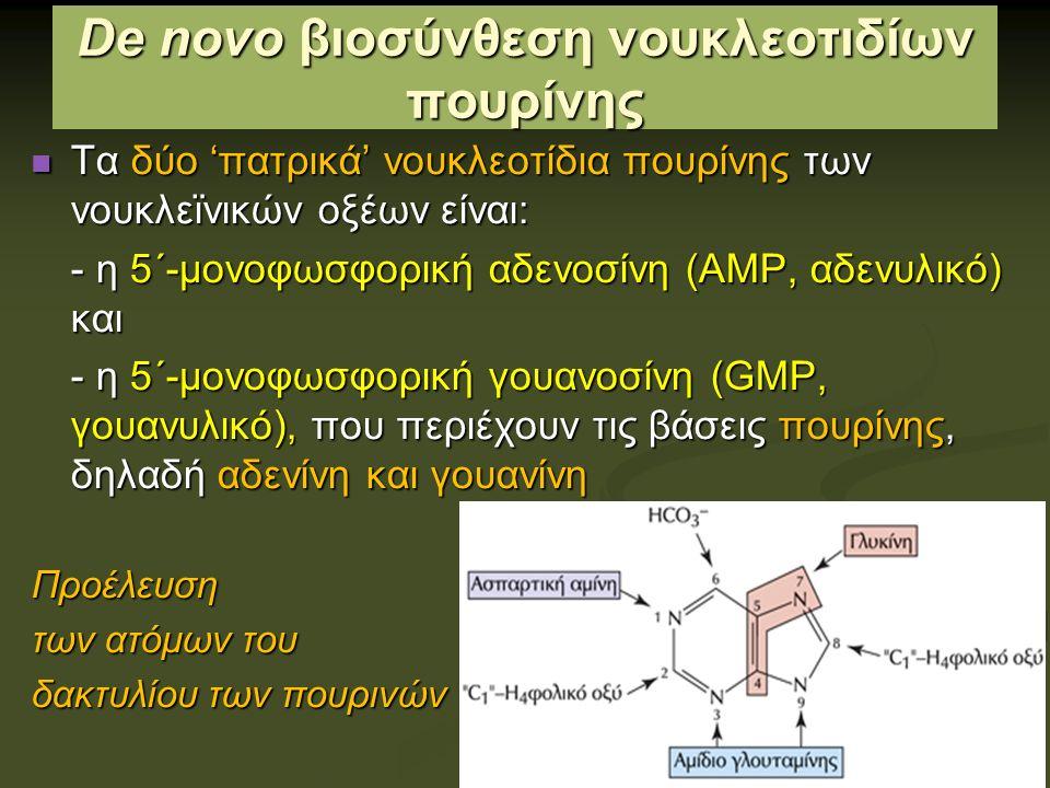 De novo βιοσύνθεση νουκλεοτιδίων πουρίνης Τα δύο 'πατρικά' νουκλεοτίδια πουρίνης των νουκλεϊνικών οξέων είναι: Τα δύο 'πατρικά' νουκλεοτίδια πουρίνης των νουκλεϊνικών οξέων είναι: - η 5΄-μονοφωσφορική αδενοσίνη (ΑΜΡ, αδενυλικό) και - η 5΄-μονοφωσφορική γουανοσίνη (GMP, γουανυλικό), που περιέχουν τις βάσεις πουρίνης, δηλαδή αδενίνη και γουανίνη Προέλευση των ατόμων του δακτυλίου των πουρινών