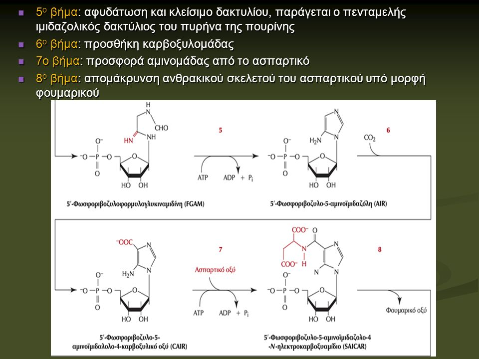 5 ο βήμα: αφυδάτωση και κλείσιμο δακτυλίου, παράγεται ο πενταμελής ιμιδαζολικός δακτύλιος του πυρήνα της πουρίνης 5 ο βήμα: αφυδάτωση και κλείσιμο δακτυλίου, παράγεται ο πενταμελής ιμιδαζολικός δακτύλιος του πυρήνα της πουρίνης 6 ο βήμα: προσθήκη καρβοξυλομάδας 6 ο βήμα: προσθήκη καρβοξυλομάδας 7ο βήμα: προσφορά αμινομάδας από το ασπαρτικό 7ο βήμα: προσφορά αμινομάδας από το ασπαρτικό 8 ο βήμα: απομάκρυνση ανθρακικού σκελετού του ασπαρτικού υπό μορφή φουμαρικού 8 ο βήμα: απομάκρυνση ανθρακικού σκελετού του ασπαρτικού υπό μορφή φουμαρικού