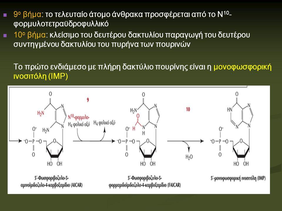 Βιοσύνθεση ΑΜΡ και GMP από ΙΜΡ Μετατροπή ινοσινικού σε αδενυλικού προϋποθέτει εισαγωγή μιας αμινομάδας από το ασπαρτικό Μετατροπή ινοσινικού σε αδενυλικού προϋποθέτει εισαγωγή μιας αμινομάδας από το ασπαρτικό