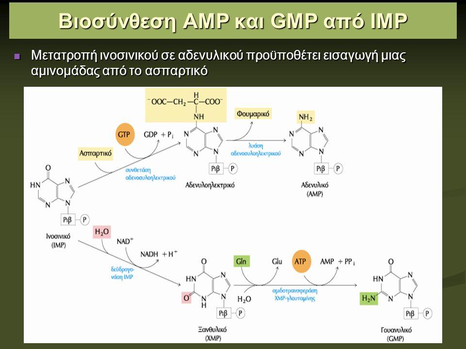 Ρυθμιστικοί μηχανισμοί στη βιοσύνθεση των νουκλεοτιδίων αδενίνης και γουανίνης Η βιοσύνθεση νουκλεοτιδίων πουρίνης ρυθμίζεται με ανάδρομη αναστολή Η βιοσύνθεση νουκλεοτιδίων πουρίνης ρυθμίζεται με ανάδρομη αναστολή Αλλοστερικό ένζυμο: αμιδοτρανσφεράση γλουταμίνης PRPP Αλλοστερικό ένζυμο: αμιδοτρανσφεράση γλουταμίνης PRPP (-) ΙΜΡ, ΑΜΡ, GΜΡ Περίσσεια GMP: (-) δεϋδρογονάση ΙΜΡ Περίσσεια ΑΜΡ: (-) συνθετάση αδενυλοηλεκτρικού