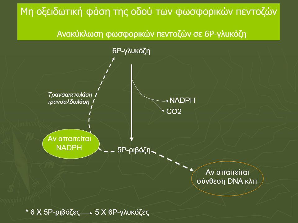 6Ρ-γλυκόζη 5Ρ-ριβόζη NADPH CO2 Τρανσακετολάση τρανσαλδολάση * 6 Χ 5Ρ-ριβόζες5 Χ 6Ρ-γλυκόζες Αν απαιτείται NADPH Αν απαιτείται σύνθεση DNA κλπ Μη οξειδ