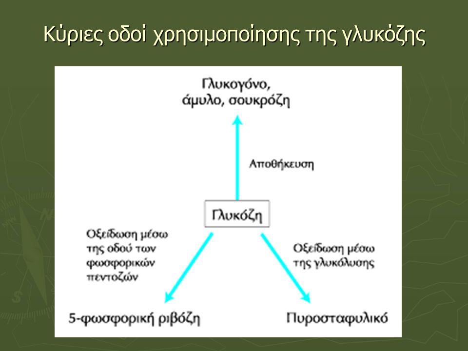 Oδός ή Κύκλος φωσφορικών πεντοζών  Μεταβολική οδός που λαμβάνει χώρα στο κυτταρόπλασμα  Ξεκινά από την 6-φωσφορική γλυκόζη και αποτελείται από: μία οξειδωτική φάση - μία οξειδωτική φάση (δύο μη αντιστρεπτές οξειδωτικές αντιδράσεις): 6- φωσφορικής γλυκόζης  σε 5-φωσφορική ριβουλόζη + 2CO 2 + 2ΝΑDPH, και αναγεννητική φάση ή μη οξειδωτική φάση - αναγεννητική φάση ή μη οξειδωτική φάση (μία σειρά αλληλομετατροπών φωσφορικών σακχάρων): μετατροπή μέρους της φωσφορικής πεντόζης σε φωσφορική εξόζη παραγωγή δύο σημαντικών ενώσεων για τον αναβολισμό  Στην οδό της μονοφωσφορικής εξόζης δεν συμβαίνει άμεση κατανάλωση ή παραγωγή ΑΤΡ, αλλά παραγωγή δύο σημαντικών ενώσεων για τον αναβολισμό: του ΝΑDPH - του ΝΑDPH (αναγωγική ένωση, σημαντική σε βιοσυνθετικές οδούς) και της 5-φωσφορικής ριβόζης - της 5-φωσφορικής ριβόζης (πρόδρομη ένωση στη βιοσύνθεση των νουκλεοτιδίων)