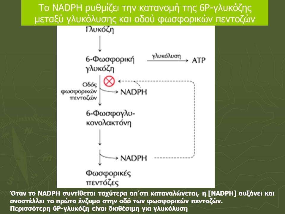 Το NADPH ρυθμίζει την κατανομή της 6Ρ-γλυκόζης μεταξύ γλυκόλυσης και οδού φωσφορικών πεντοζών Όταν το NADPH συντίθεται ταχύτερα απ'οτι καταναλώνεται,