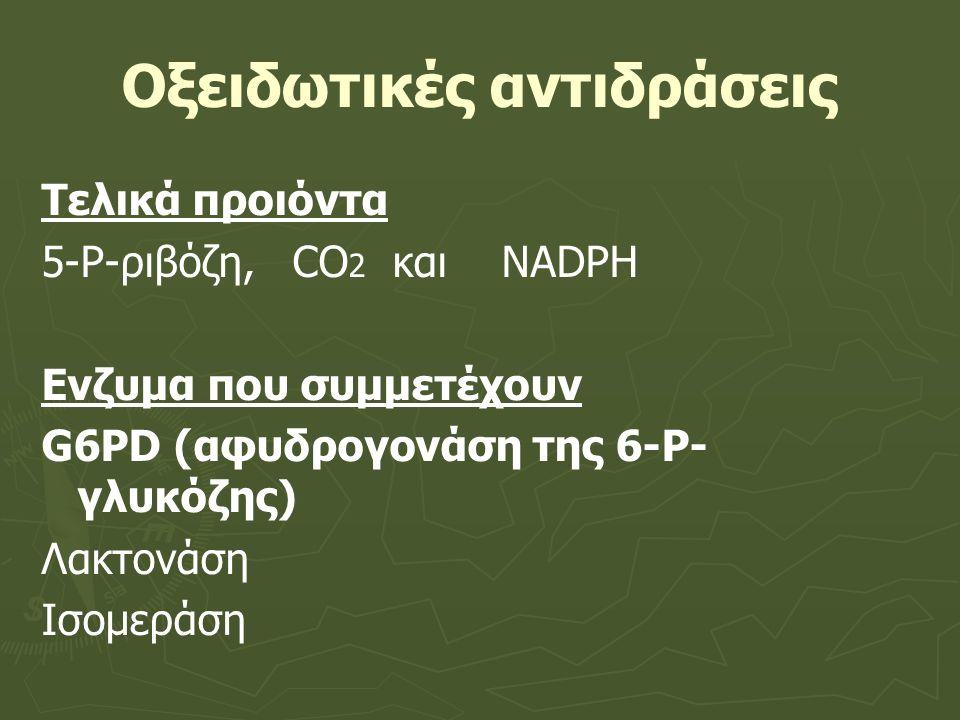 Οξειδωτικές αντιδράσεις Τελικά προιόντα 5-Ρ-ριβόζη, CO 2 και NADPH Ενζυμα που συμμετέχουν G6PD (αφυδρογονάση της 6-P- γλυκόζης) Λακτονάση Ισομεράση